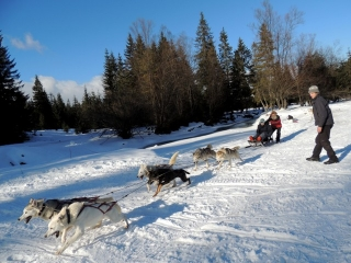 One of our guests enjoying the Husky Dog Sledding experience in Zakopane last week - 31/1/13