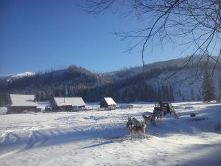 Husky Dogs out running in Zakopane, 16th November 2016