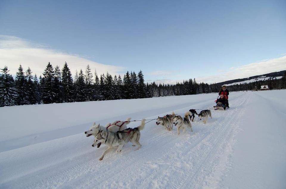 Dog Sledding with Fun Dog in Zakopane with White Side Holidays Poland