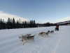 Dog Sledding with Fun Dog in Zakopane with White Side Holidays Poland